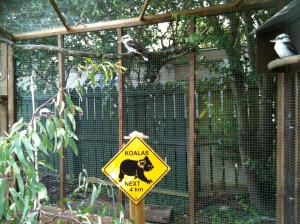 I don't think the Koala has every managed to shift himself 4 metres. let alone 4km.